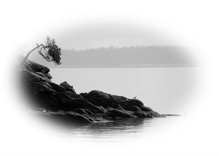 Black Greeting Card featuring the photograph Lonley Gull by J D Banks