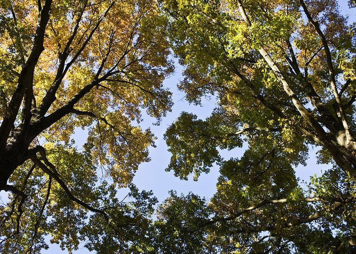 Fall Greeting Card featuring the photograph Look Up by Teresa Mucha