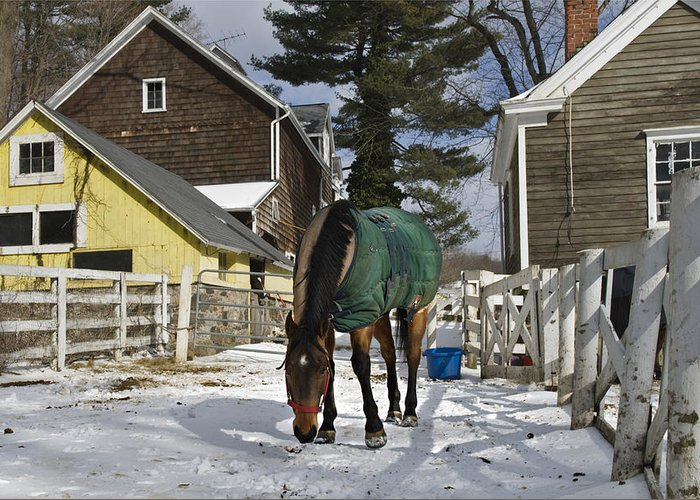Horse Greeting Card featuring the photograph Looking For Stray Hay by Jack Goldberg