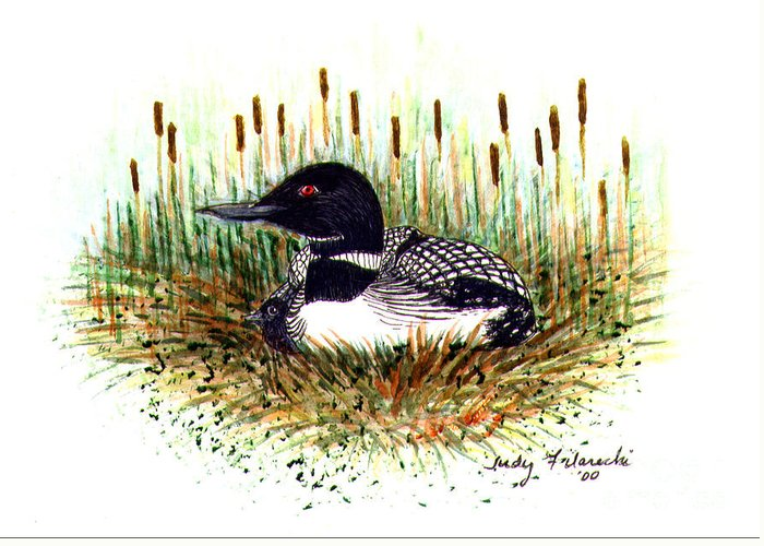 Loon Greeting Card featuring the painting Loon and Baby Judy Filarecki Watercolor by Judy Filarecki