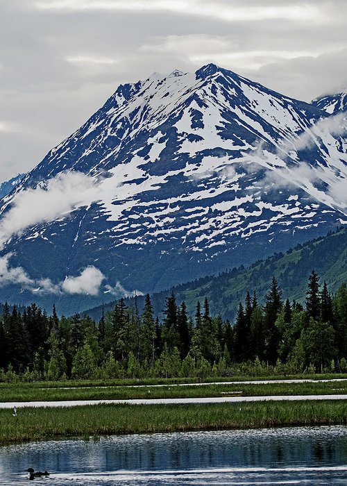 Alaska Greeting Card featuring the photograph Looned View by Eric Nelson