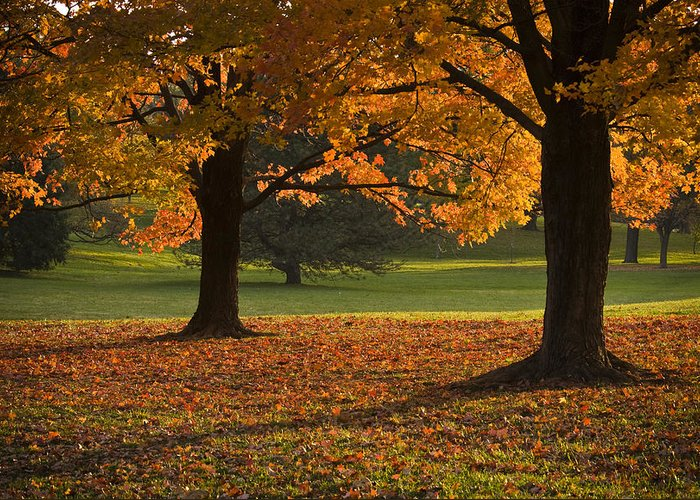 Seasons Greeting Card featuring the photograph Loose Park Maple Trees by Chad Davis