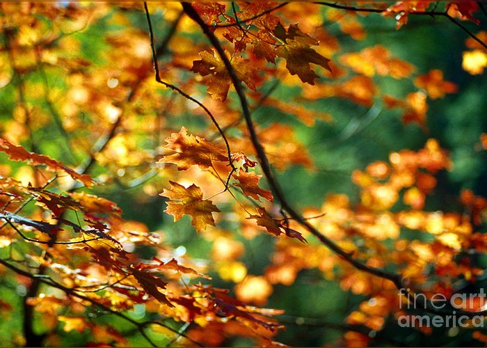 Fall Color Greeting Card featuring the photograph Lost In Leaves by Kathy McClure