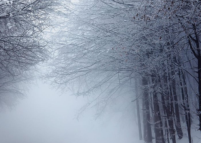 Fog Greeting Card featuring the photograph Lost Way by Evgeni Dinev