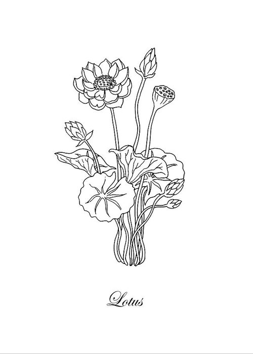 Lotus flower botanical drawing black and white greeting card for lotus greeting card featuring the drawing lotus flower botanical drawing black and white by irina sztukowski mightylinksfo