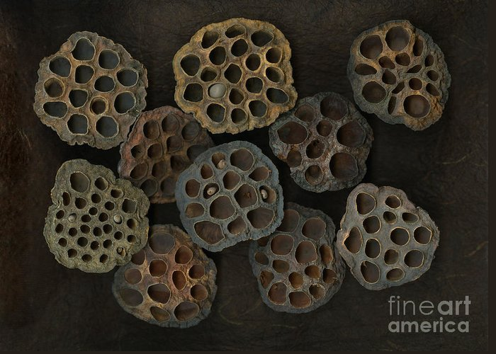 Lotus Greeting Card featuring the photograph Lotus Pods by Christian Slanec