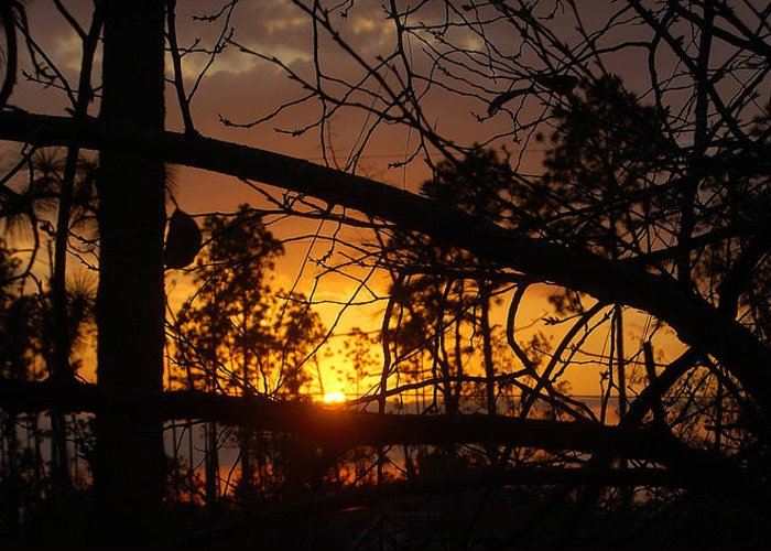 Sunset Greeting Card featuring the photograph Louisiana Sunset by Heather S Huston