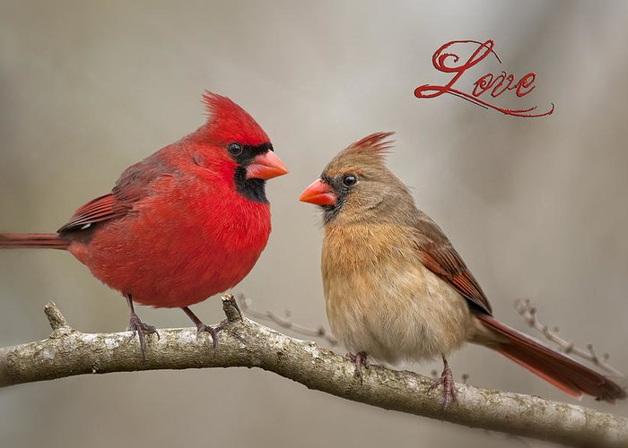 Cardinals Greeting Card featuring the photograph Love by Bonnie Barry