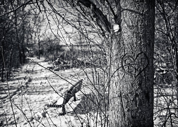 Cj Schmit Greeting Card featuring the photograph Love On A Tree by CJ Schmit