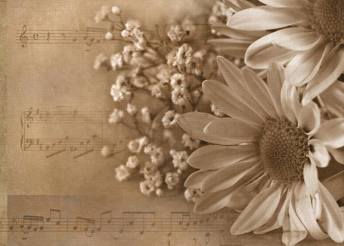 Daisy Greeting Card featuring the photograph Love Song by Maria Dryfhout