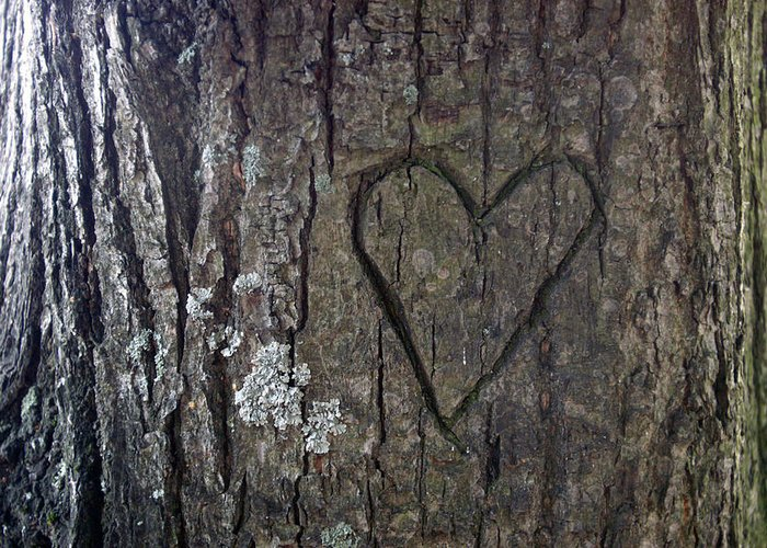 Tree Greeting Card featuring the photograph Love Tree by Jessica Rose