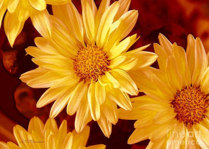 Flowers Greeting Card featuring the photograph Lovely Mums by Patricia L Davidson