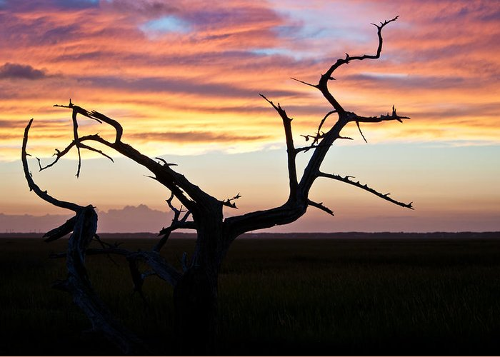 Dewees Island Greeting Card featuring the photograph Lowcountry Sunset by Jo Marie Brown