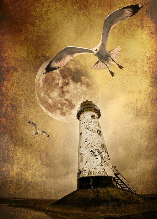 Seagull Greeting Card featuring the photograph Lunar Flight by Meirion Matthias