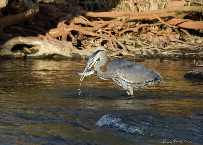 Heron Greeting Card featuring the photograph Lunch On The Neuse River by George Randy Bass