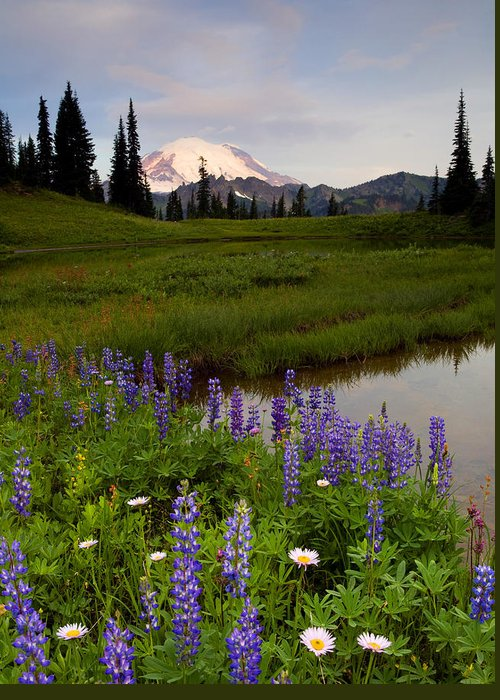 Rainier Greeting Card featuring the photograph Lupine Sunrise by Mike Dawson