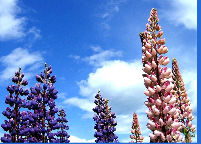 Lupins Greeting Card featuring the photograph Lupins by Will Borden