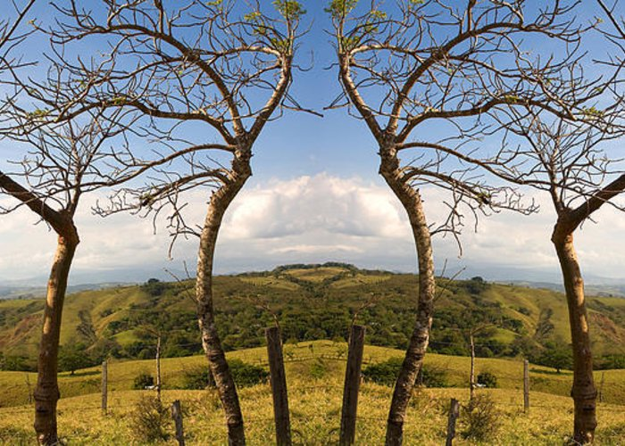 Trees Greeting Card featuring the photograph Lush Land Leafless Trees IIi by Madeline Ellis