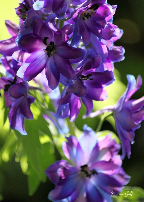 Delphinium Greeting Card featuring the photograph Lush by Suzanne Gaff