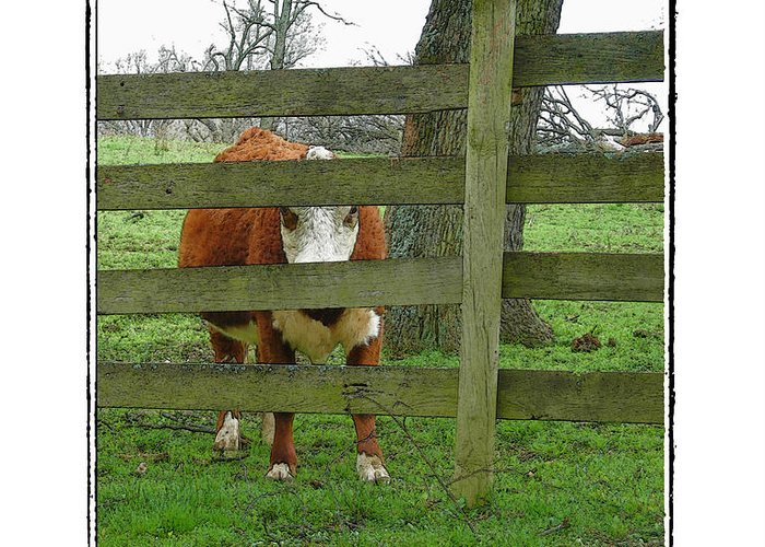 Cow Greeting Card featuring the photograph LZ by Robert Boyette