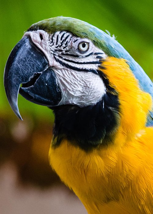Duke Greeting Card featuring the photograph Duke Macaw by Alan Hart