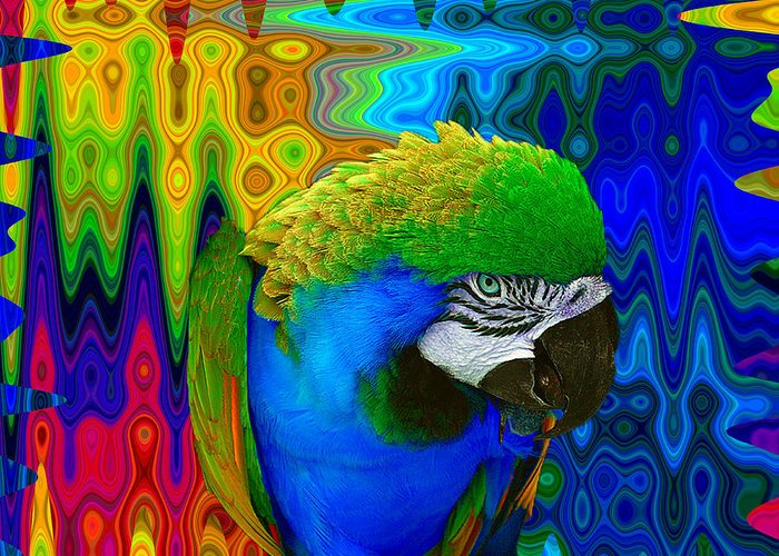 Macaw Photographs Greeting Cards