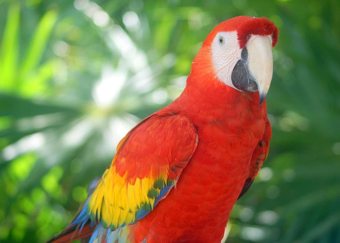 Greeting Card featuring the photograph Macaw by Todd Hummel