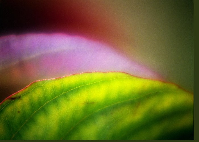 Macro Greeting Card featuring the photograph Macro Leaf by Lee Santa
