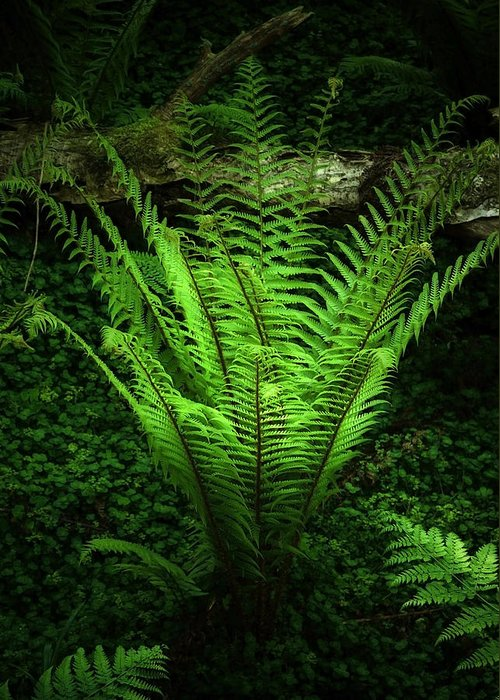 Black Greeting Card featuring the photograph Magic Fern by Svetlana Sewell