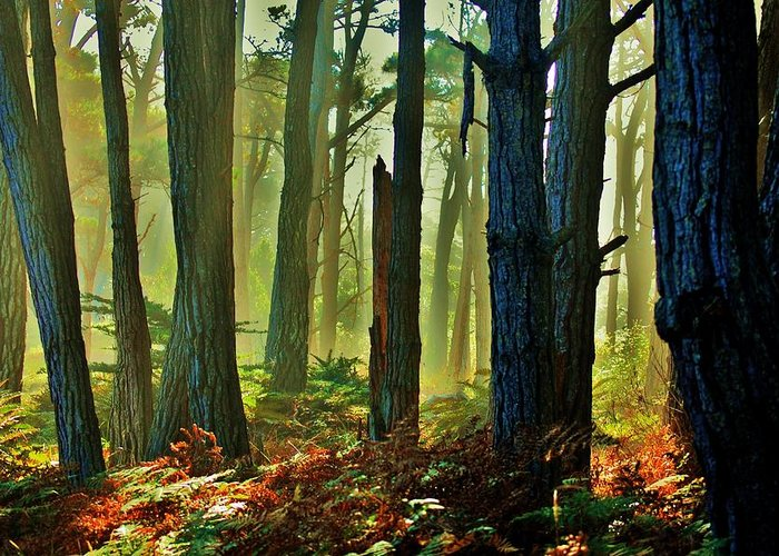 Forest Greeting Card featuring the photograph Magic Forest by Helen Carson