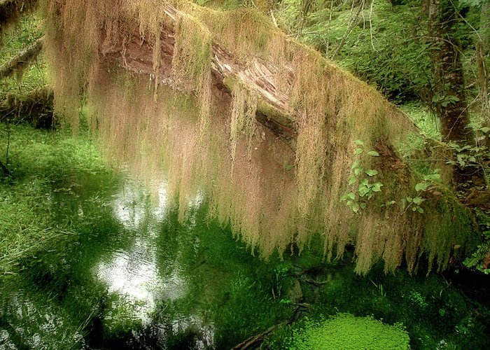Rainforest Greeting Card featuring the photograph Magical Hall Of Mosses - Hoh Rain Forest Olympic National Park Wa Usa by Christine Till