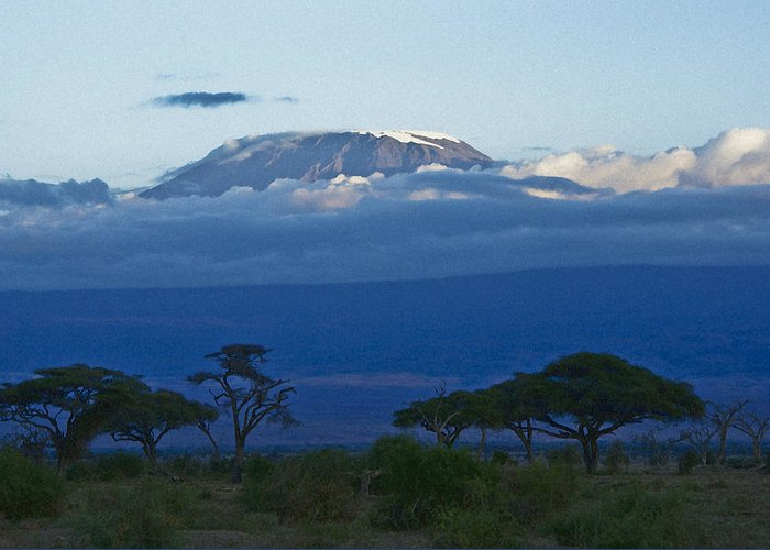 Africa Greeting Card featuring the photograph Magnificent Kilimanjaro by Michele Burgess