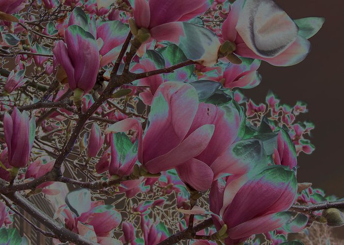 Magnolia Greeting Card featuring the photograph Magnolia Beauty by Vijay Sharon Govender
