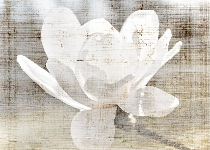 Magnolia Greeting Card featuring the photograph Magnolia Flower by Elena Elisseeva