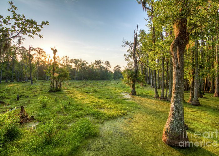 Magnolia Plantation Greeting Card featuring the photograph Magnolia Plantation Cypress Swamp Sunrise by Dustin K Ryan