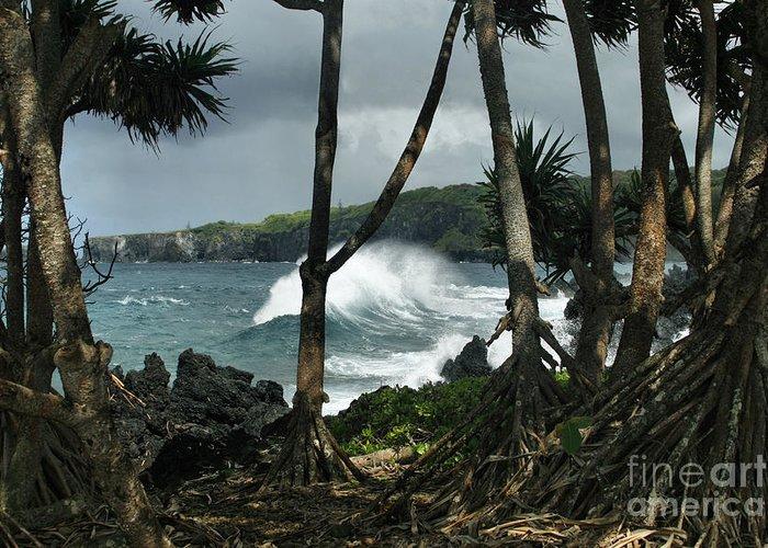 Aloha Greeting Card featuring the photograph Mahama Lauhala Keanae Peninsula Maui Hawaii by Sharon Mau