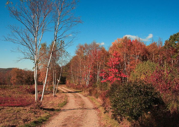 Landscape Greeting Card featuring the photograph Maine Fall by Doug Mills