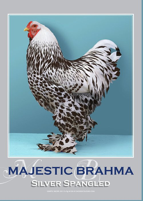 Poultry Greeting Card featuring the digital art Majestic Brahma Silver Spangled by Sigrid Van Dort