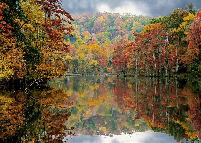 Fall Color Greeting Card featuring the photograph Majestic by Carolyn Fletcher