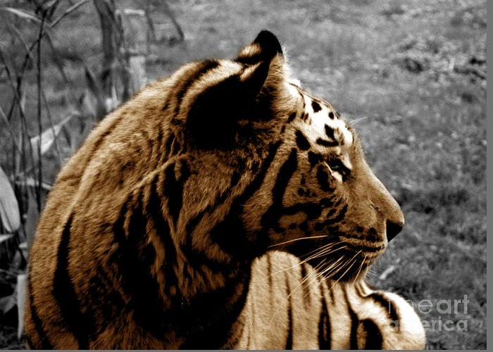 Tiger Greeting Card featuring the photograph Majesty by Jason Williams