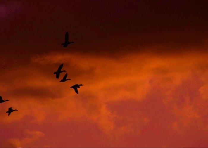 Sunset Greeting Card featuring the photograph Mallards At Sunset by Eric Noa