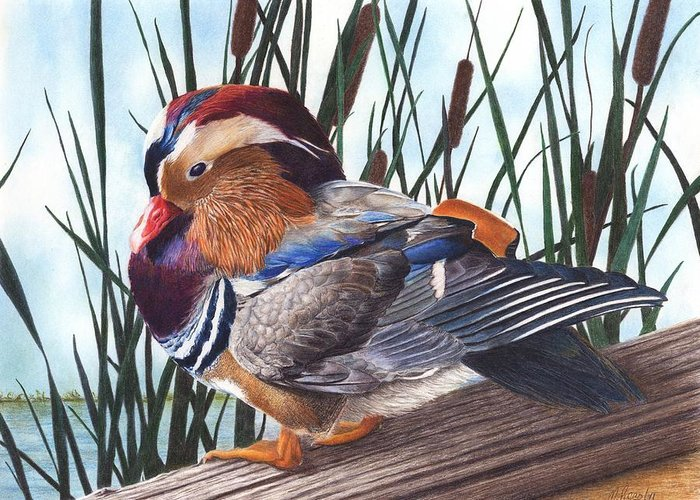 Duck Greeting Card featuring the drawing Mandarin Duck by Marlene Piccolin