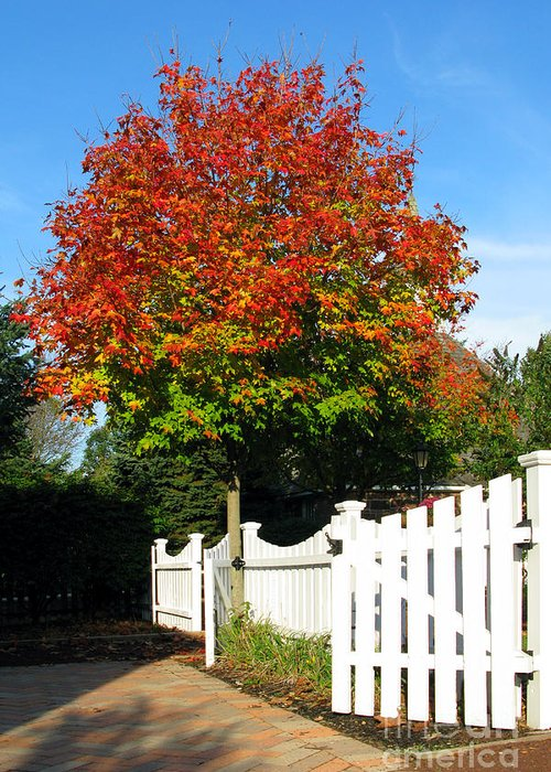Alley Greeting Card featuring the photograph Maple And Picket Fence by Olivier Le Queinec