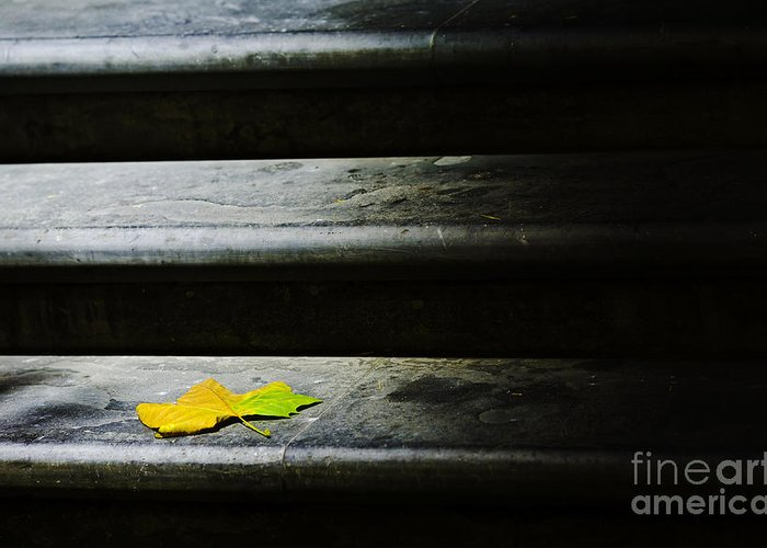 Maple Leaf Greeting Card featuring the photograph Maple Leaf On Step by Sheila Smart Fine Art Photography
