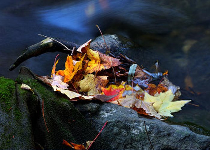 Landscape Greeting Card featuring the photograph Maple Leaves-0004 by Sean Shaw
