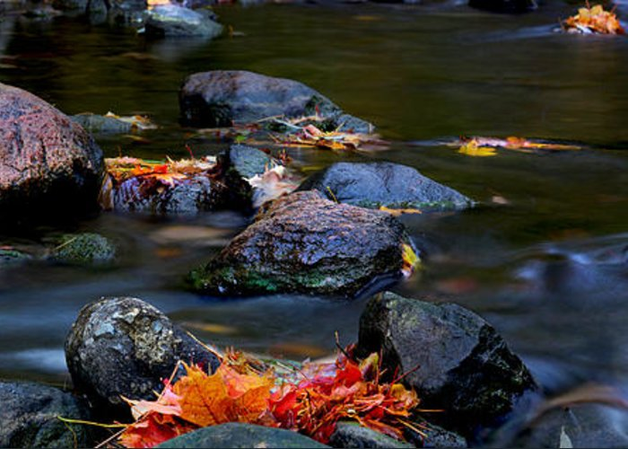 Landscape Greeting Card featuring the photograph Maple Leaves-0007 by Sean Shaw