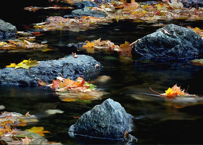 Landscape Greeting Card featuring the photograph Maple Leaves-0008 by Sean Shaw