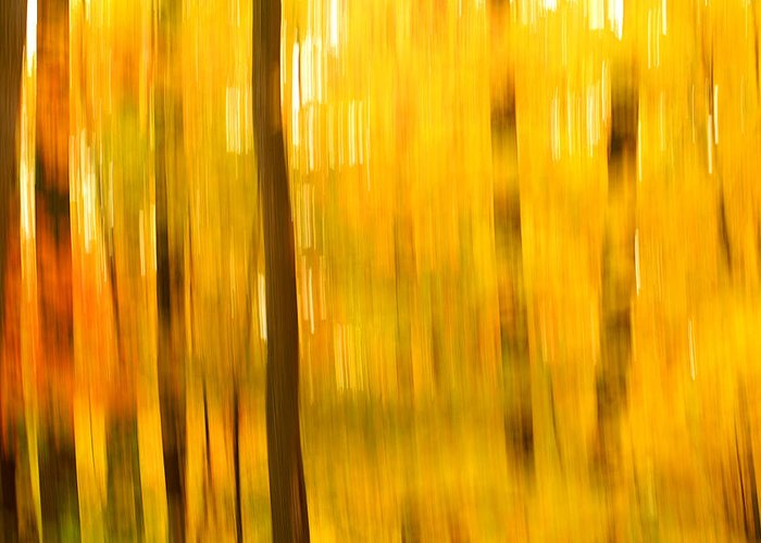 Abstract Photo Greeting Card featuring the photograph Maple Magic by Bill Morgenstern