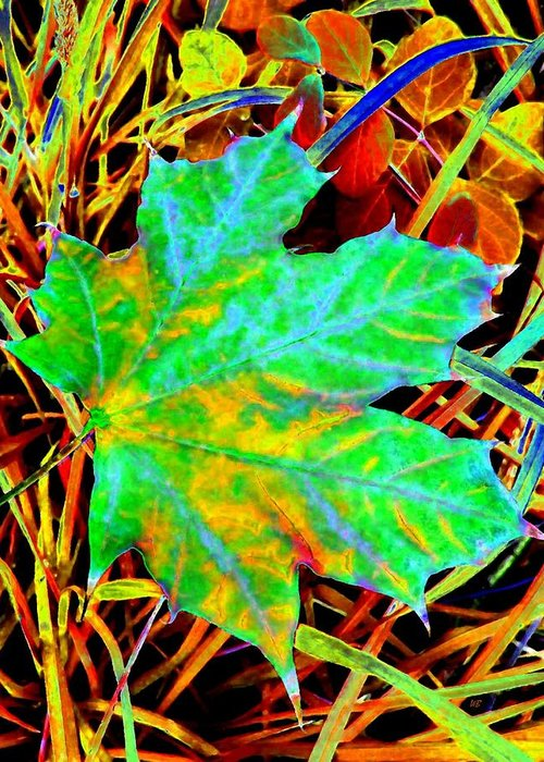 Maple Leaf Greeting Card featuring the photograph Maple Mania 21 by Will Borden