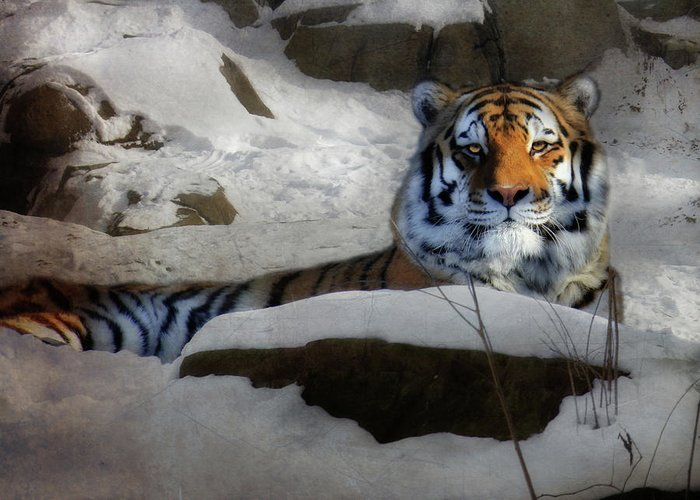 Amur Tiger Greeting Card featuring the photograph Mara by Lori Deiter